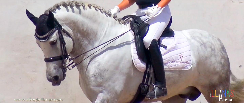 Exhibición a caballo doma clásica