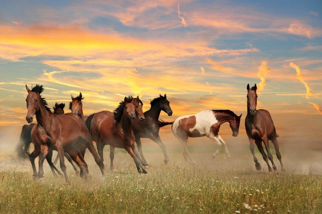 landscape, horses, sky